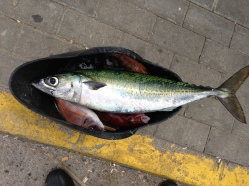 Caballa 2 kg 12-05-2013
