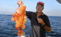 Gallineta rafael 2,2 kg 10-09-13