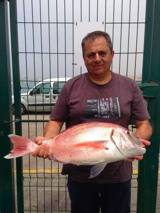 Pargo concurso 4,1 kg 12-05-2013